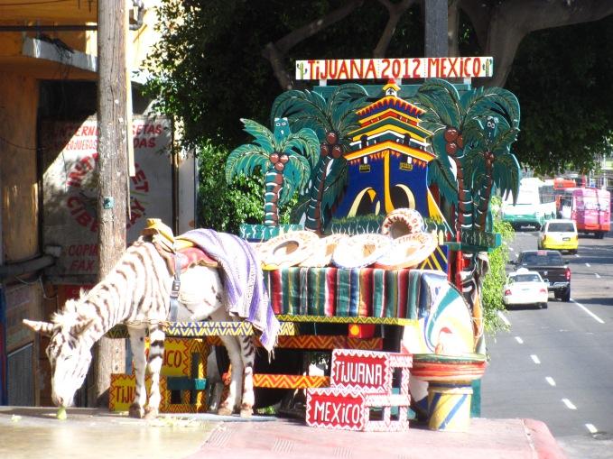 Tijuana Zonkeys (Donkey)
